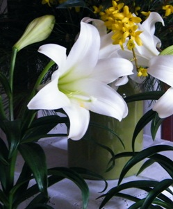 Easter Lily at the Michigan Self Realization Meditation Healing Centre