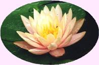 Find your true Self with Pure Meditation at the Self Realization Meditation Healing Centre, Bath MI USA
