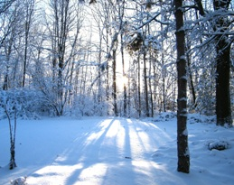 winter morning sunshine in the garden at the Self Realization Meditation Healing Centre, Michigan, USA